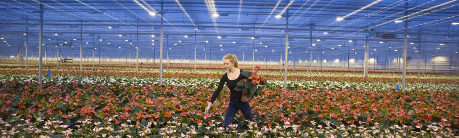 Dalsem -  High-tech, efficient and reliable greenhouses and installations