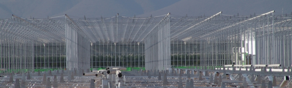 Dalsem - Competitive greenhouses - The best price-quality ratio guaranteed